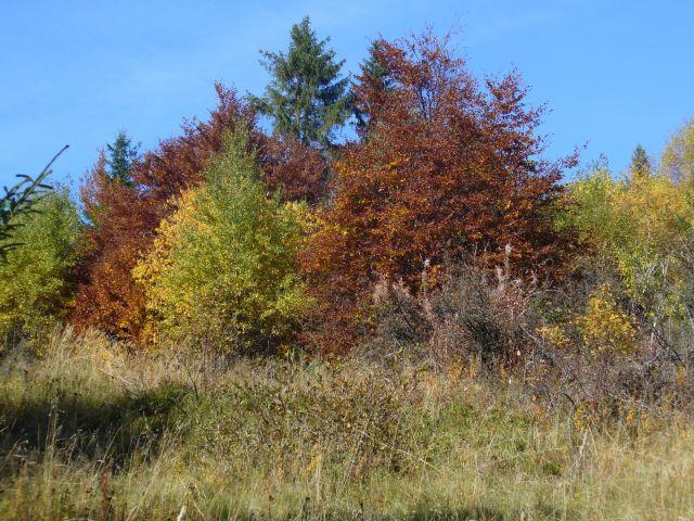 Barwy jesieni - kliknij żeby powiększyć
