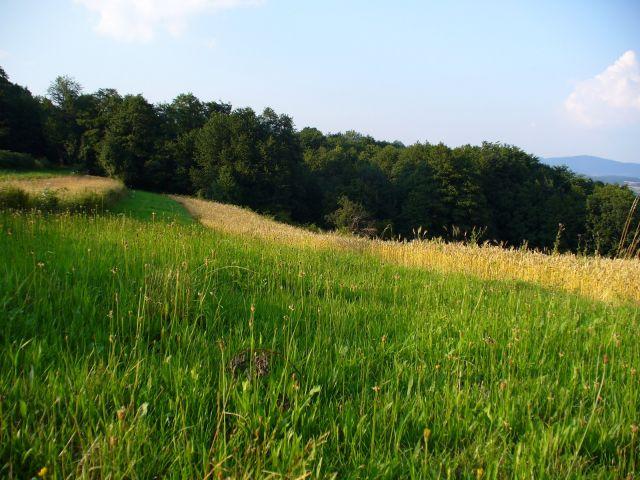 Długa zielona łąka - kliknij żeby powiększyć