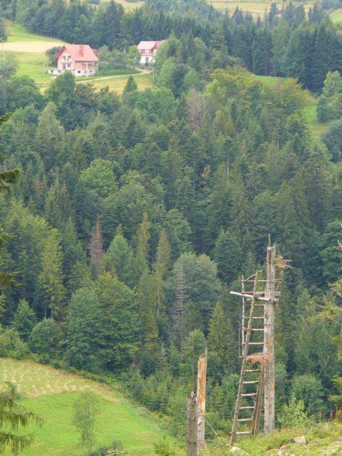 Drewniana ambona - kliknij żeby powiększyć