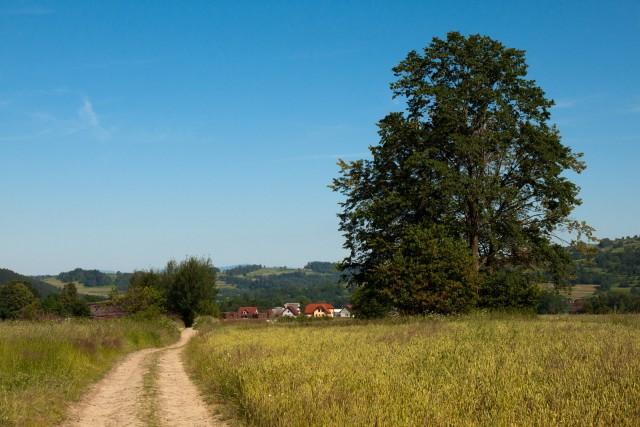Droga i drzewa - kliknij żeby powiększyć