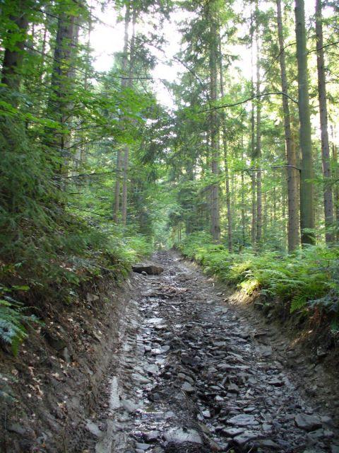 Droga przez las - kliknij żeby powiększyć