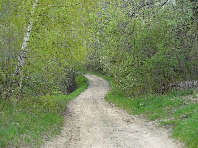 Droga przez zieleń - kliknij żeby powiększyć