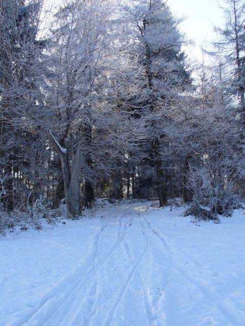 Droga w las - kliknij żeby powiększyć