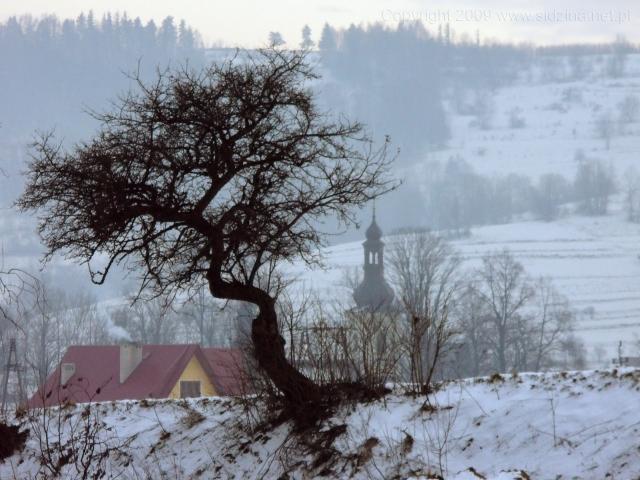 Drzewo i wieża - kliknij żeby powiększyć