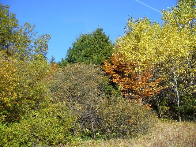 Jesienne liście - kliknij żeby powiększyć