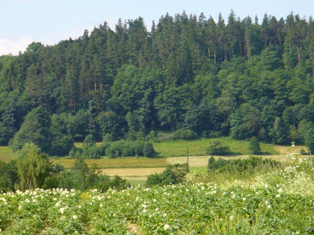 Kapliczka w cieniu drzew - kliknij żeby powiększyć