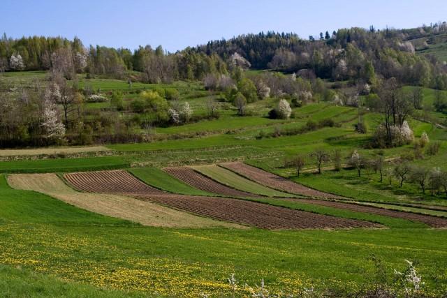 Łąki i pola - kliknij żeby powiększyć