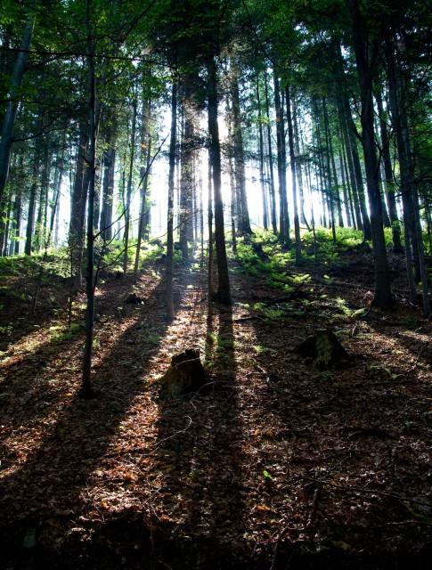 Mroczny las - kliknij żeby powiększyć