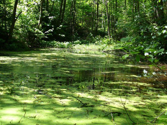 Niewielkie jeziorko - kliknij żeby powiększyć