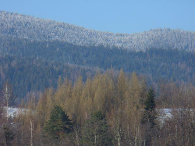 Ośnieżony las - kliknij żeby powiększyć