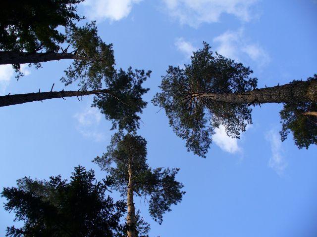 Pod drzewami - kliknij żeby powiększyć