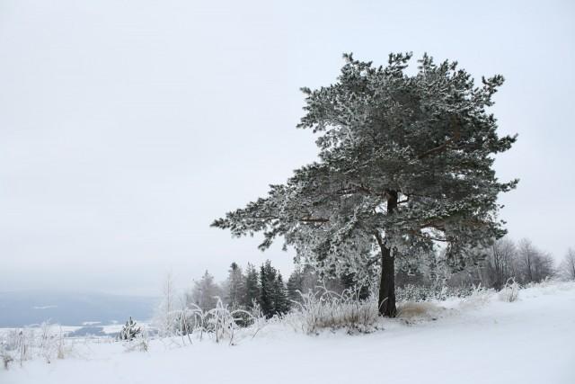 Samotne drzewo - kliknij żeby powiększyć