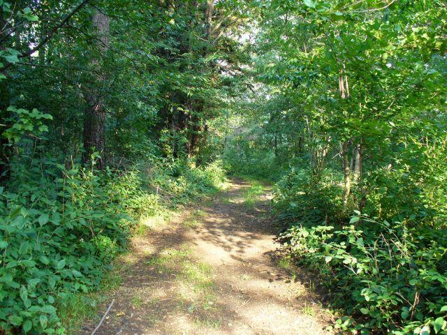 Ścieżka przez las - kliknij żeby powiększyć