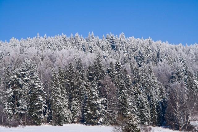 Śnieżna ściana - kliknij żeby powiększyć
