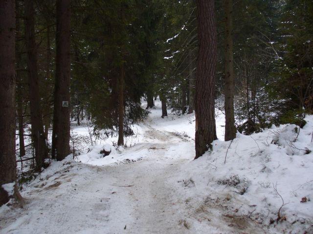 Trasa rowerowa przez las - kliknij żeby powiększyć