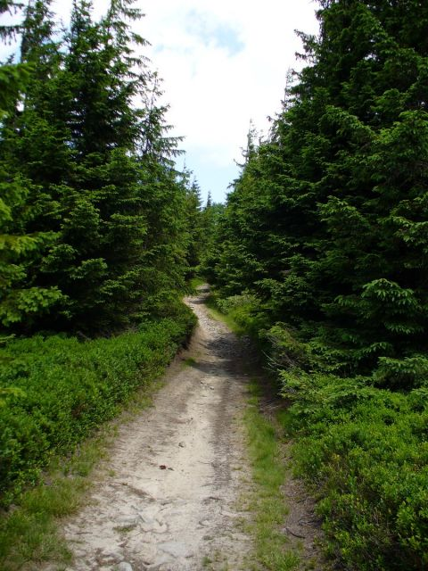 Wąska ścieżka - kliknij żeby powiększyć