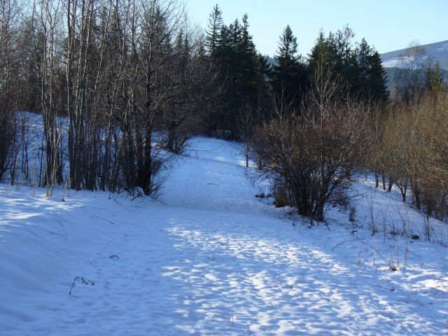 Wąskie pole w śniegu - kliknij żeby powiększyć