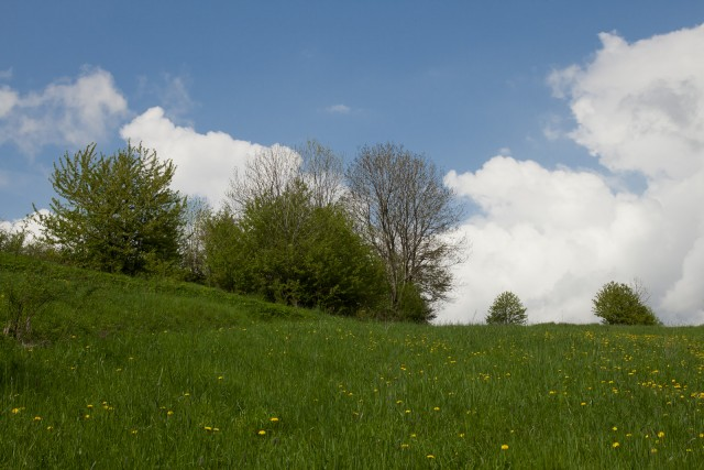 Wiosenna łąka - kliknij żeby powiększyć