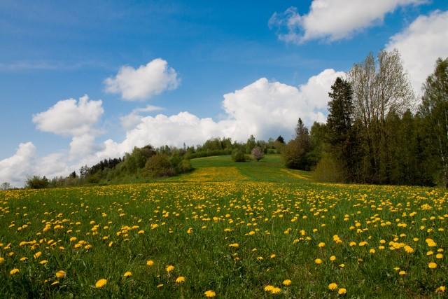 Wiosna - kliknij żeby powiększyć