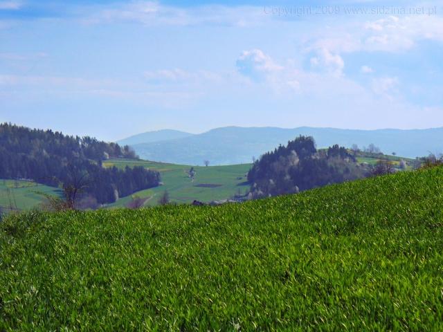 Zielona łąka i dal - kliknij żeby powiększyć