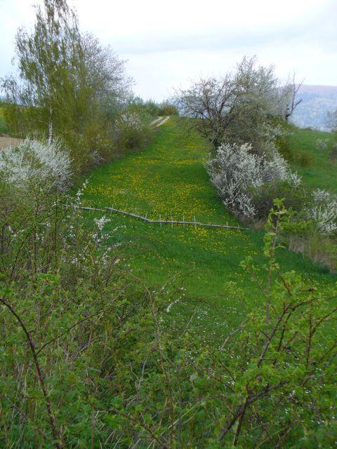 Zielona łąka - kliknij żeby powiększyć