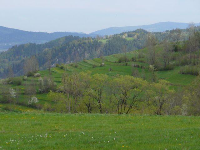 Zielone wzgórze - kliknij żeby powiększyć