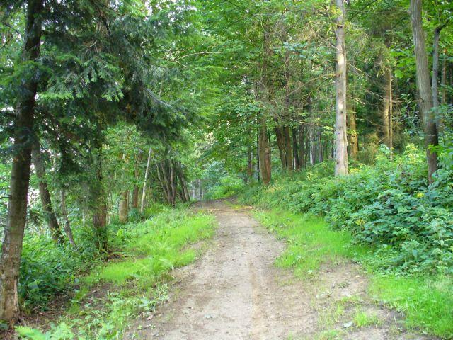 Zielony las - kliknij żeby powiększyć