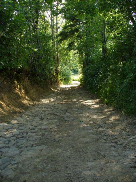 Zielony tunel - kliknij żeby powiększyć