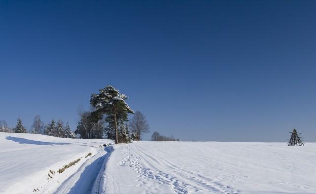 Zimowa łąka - kliknij żeby powiększyć