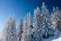 Białe drzewa w Sidzinie
