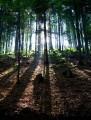 Mroczny las w Sidzinie