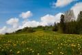 Wiosna w Sidzinie