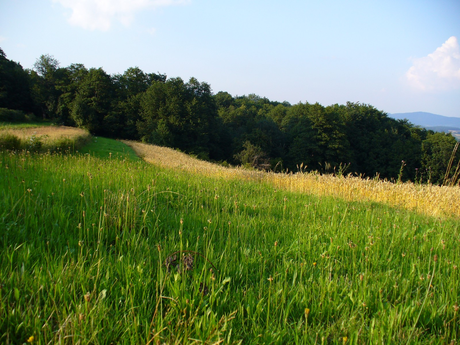 Długa zielona łąka