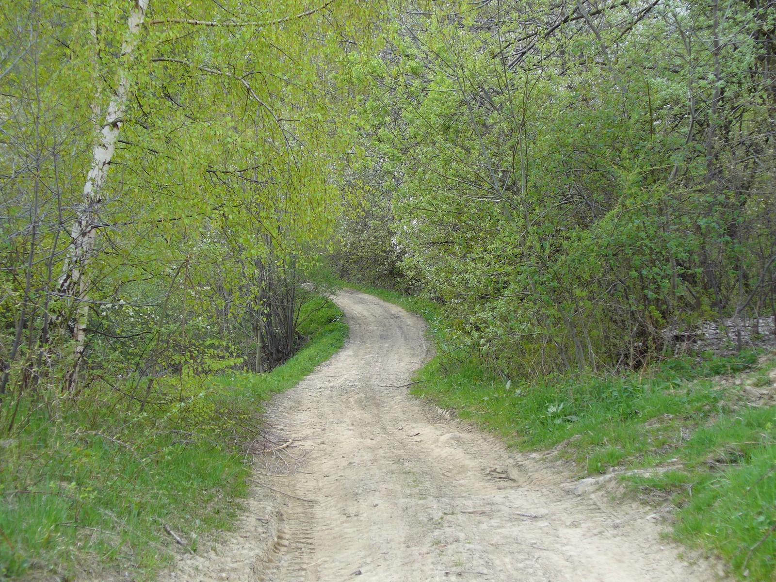 Droga przez zieleń