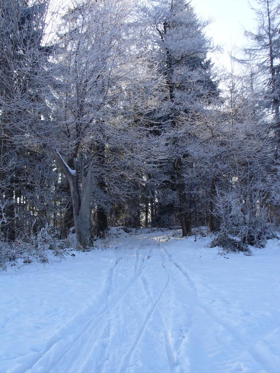Droga w las