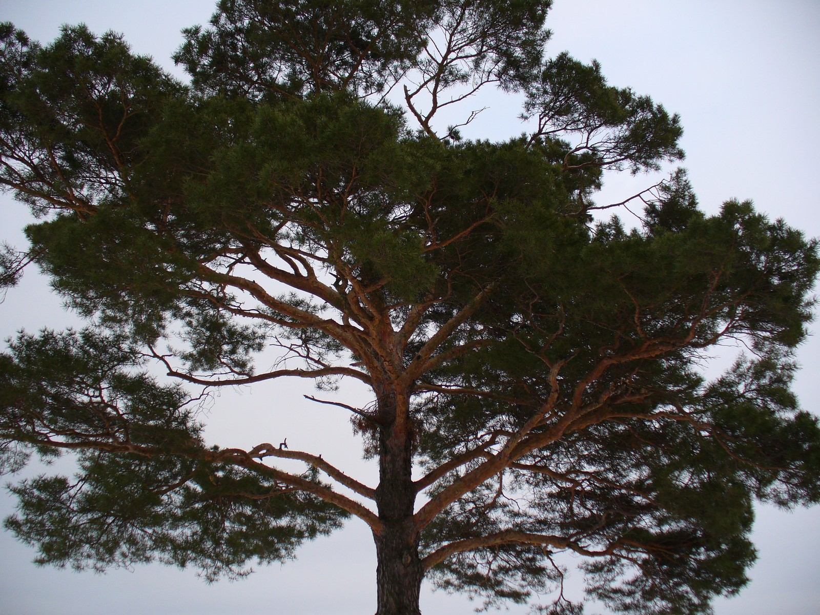 Drzewo na tle nieba