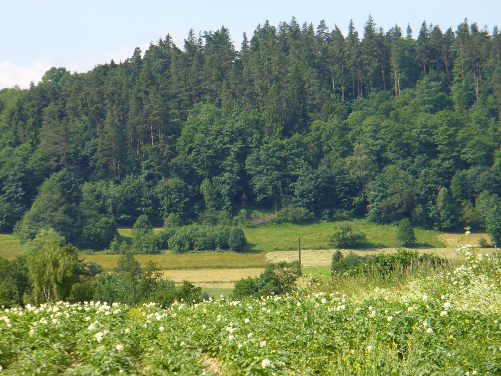 Kapliczka w cieniu drzew