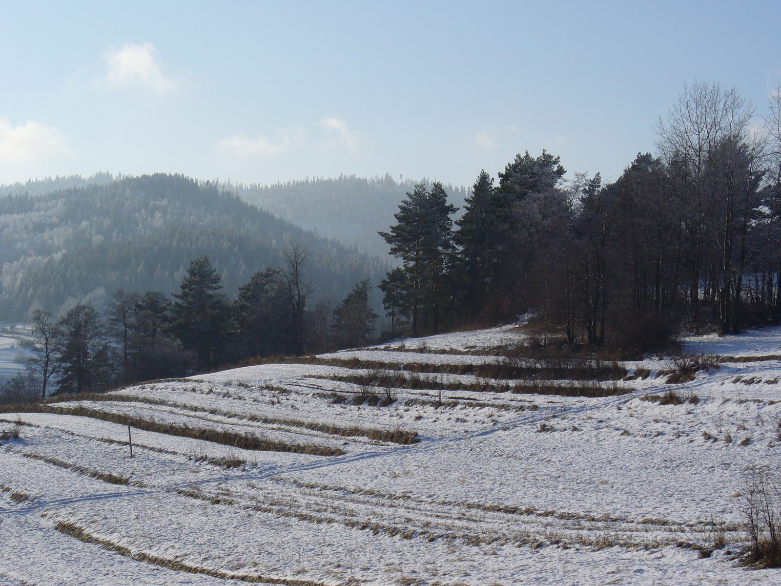 Łagodny stok i las