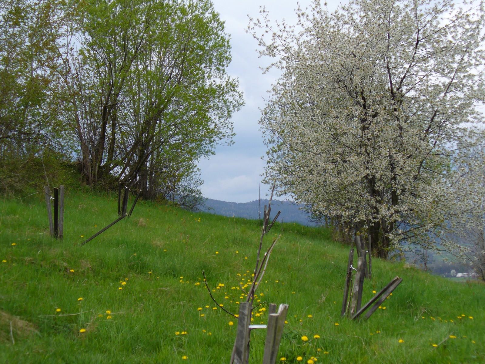 Łąka i drzewa