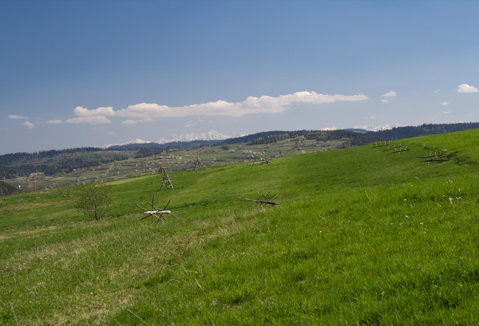 Łąka i góry