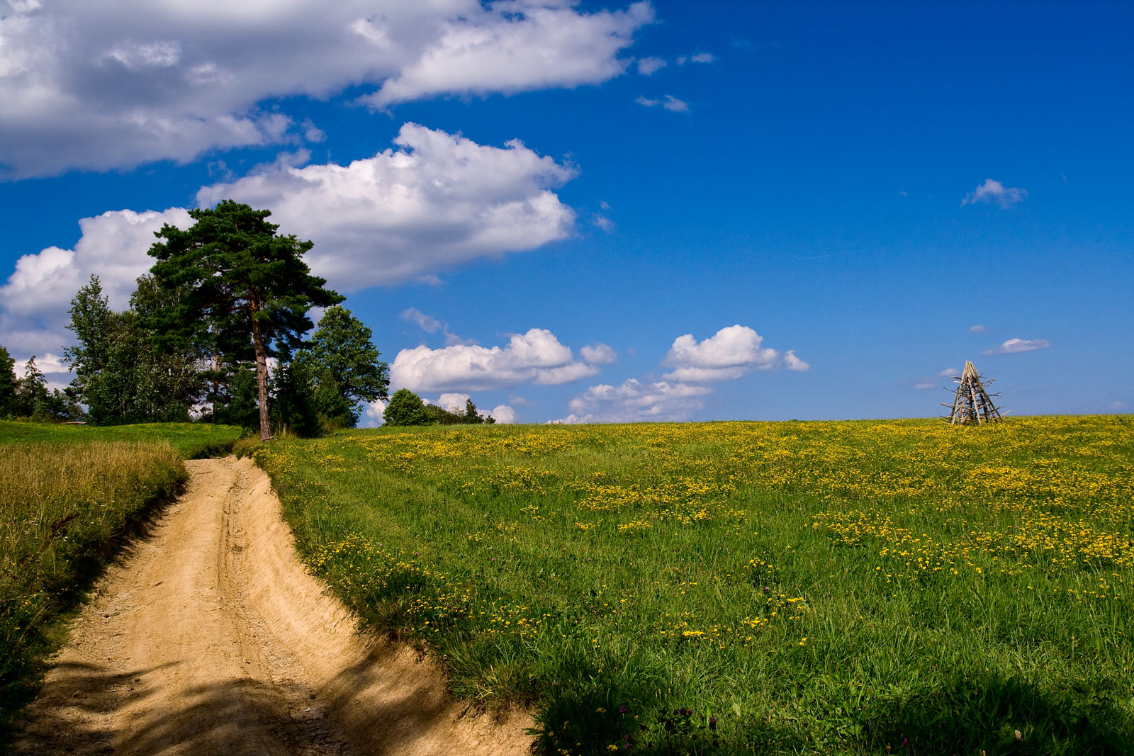 Niebiańska łąka