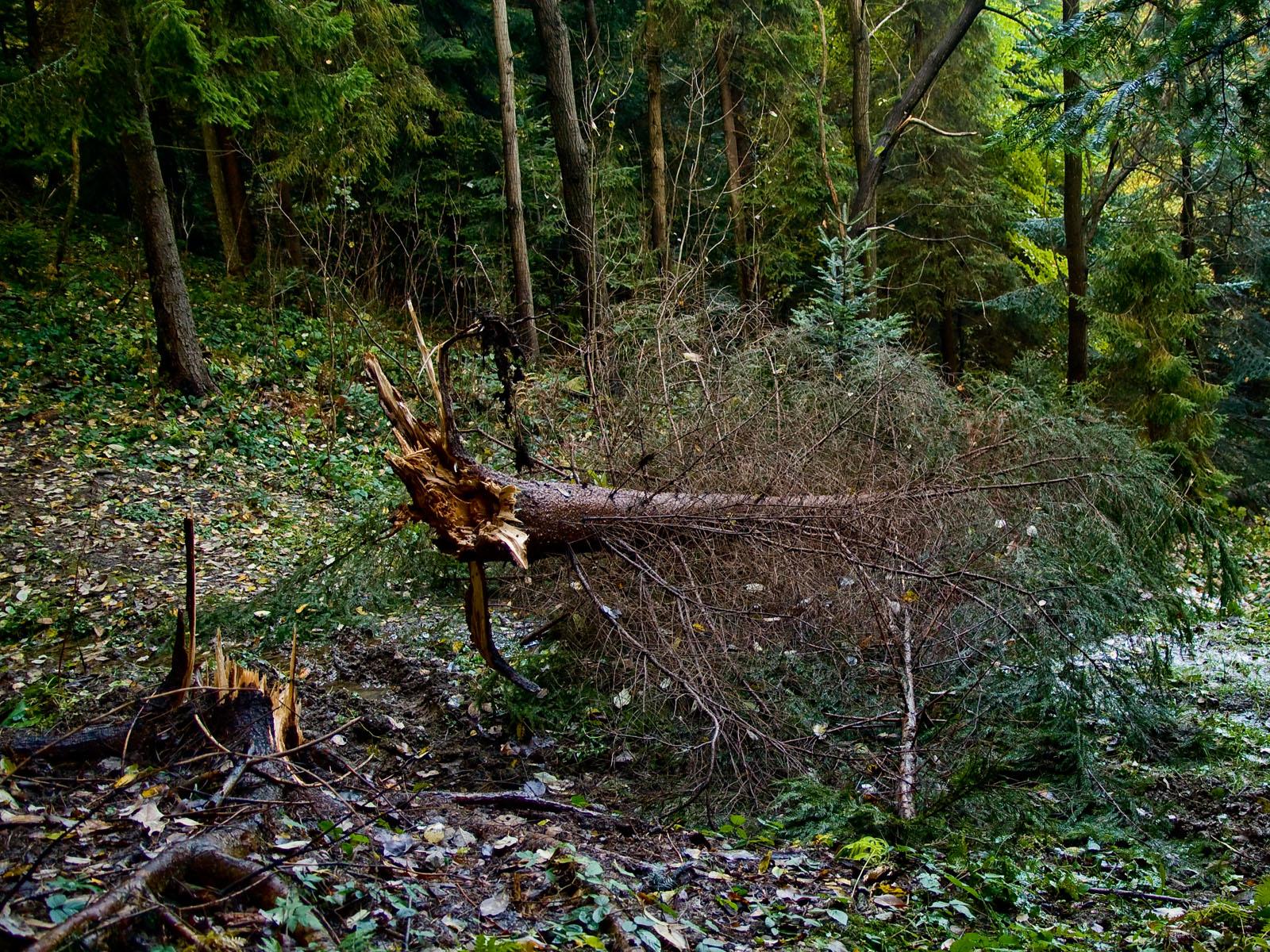 Połamane drzewo