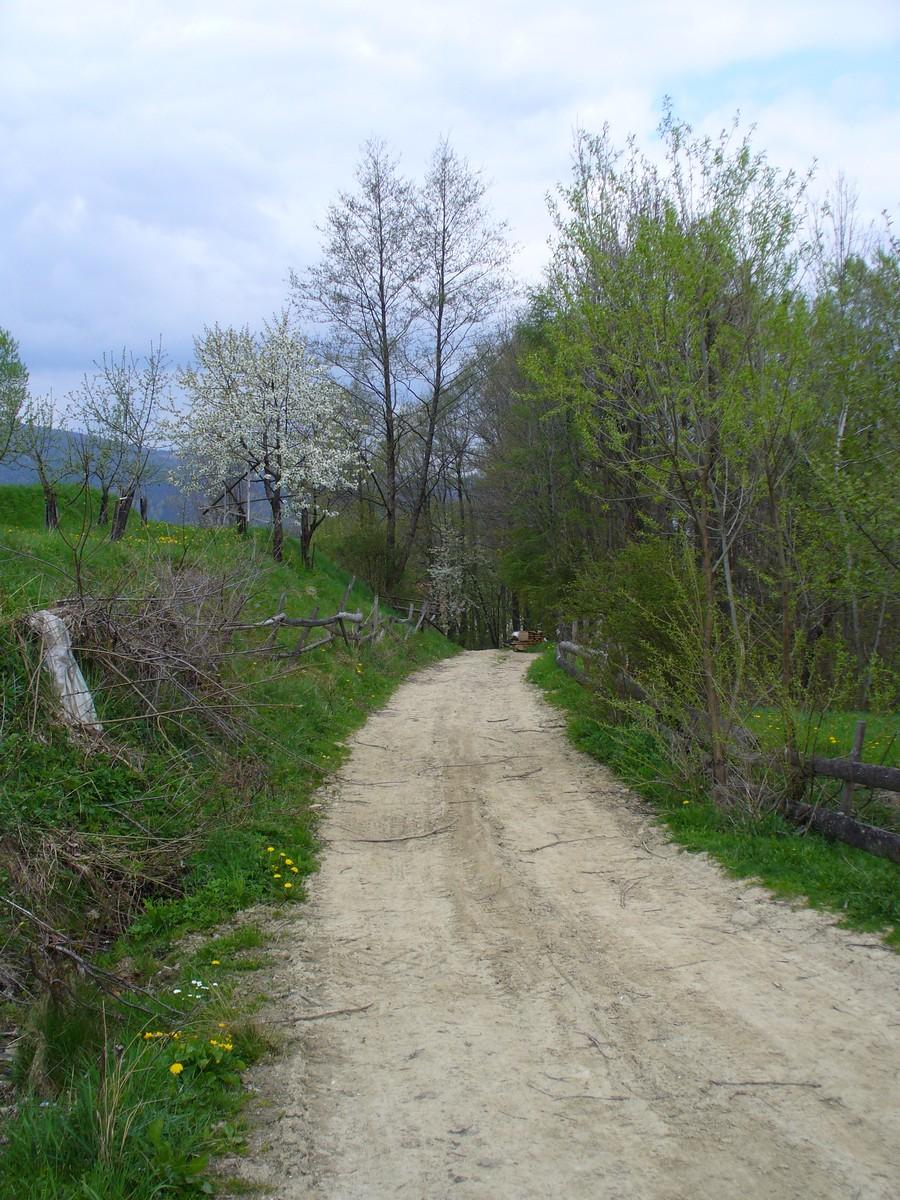 Polna droga wiosną
