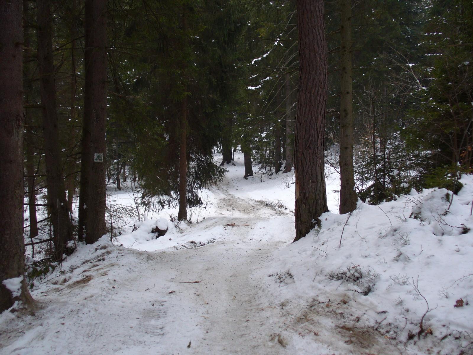 Trasa rowerowa przez las