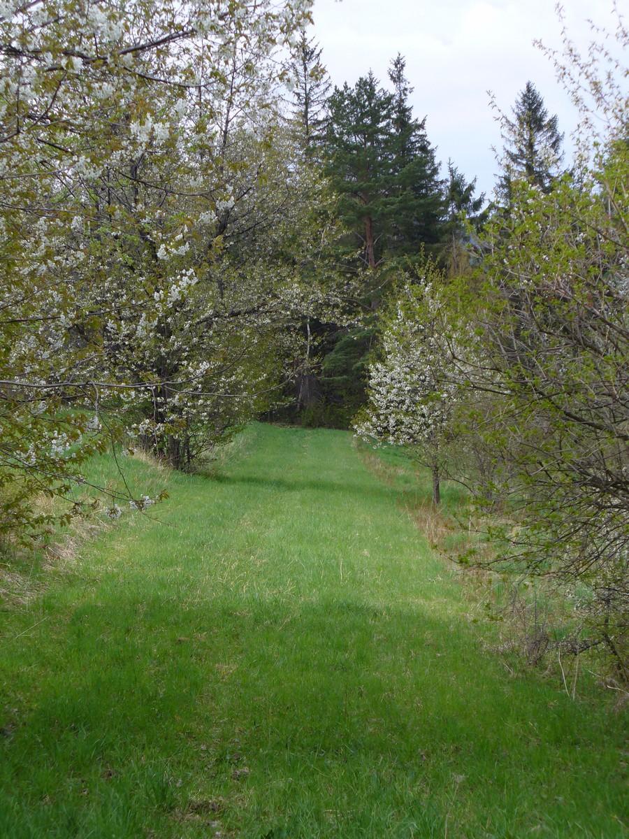 Wąska łąka wiosną