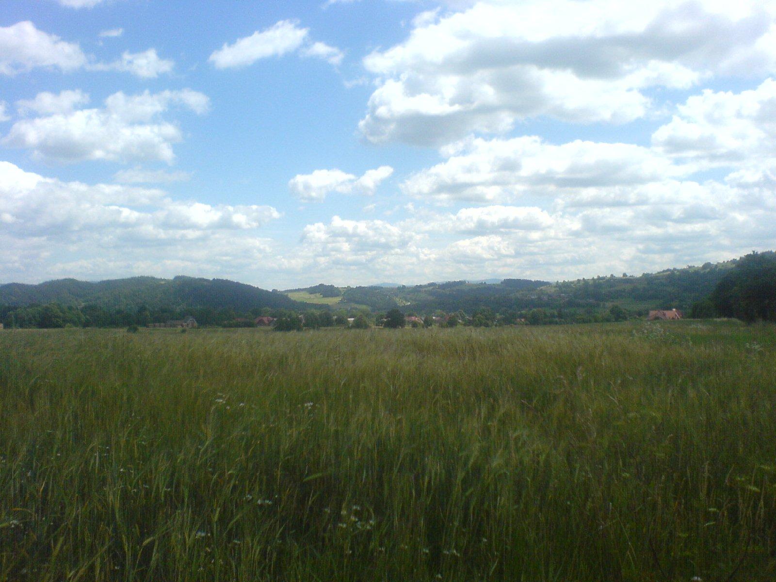 Zboże i chmury