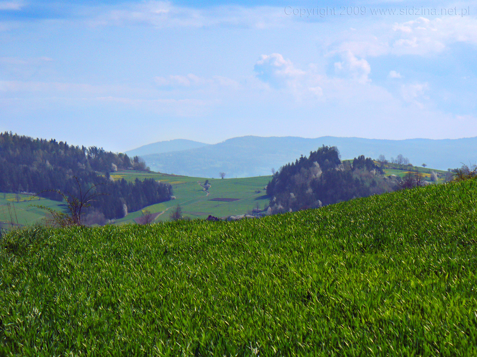 Zielona łąka i dal