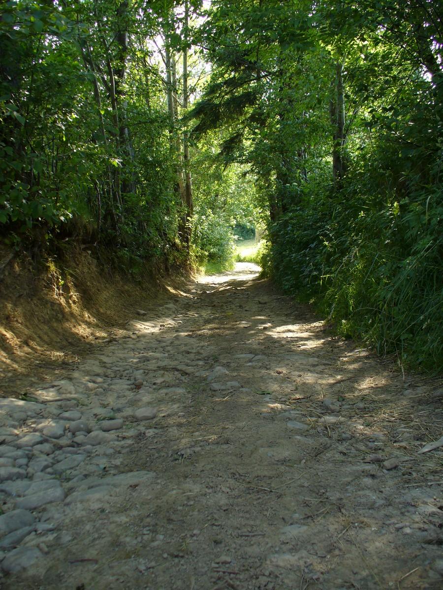 Zielony tunel